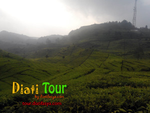 ciwidey tea plantations